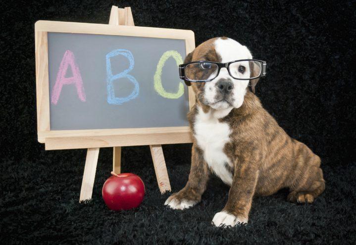 Grundfärdigheter – hundens ABC