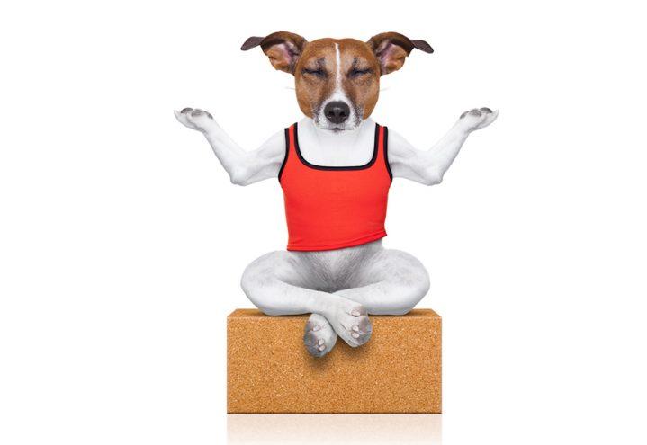 Doggie-Zen: Mindfulness för hundar