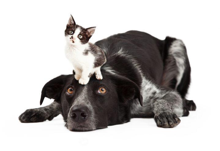 """""""Nnggh… – min hund kan det inte gott nog ändå!"""""""