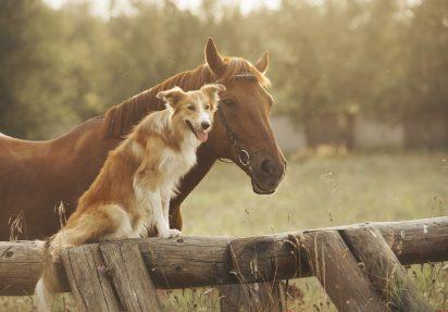 Crossover-hundar (och –hästar)
